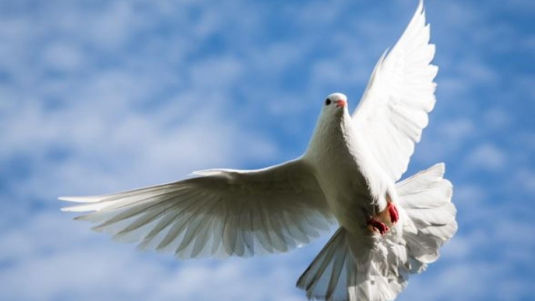 Passover to Pentecost